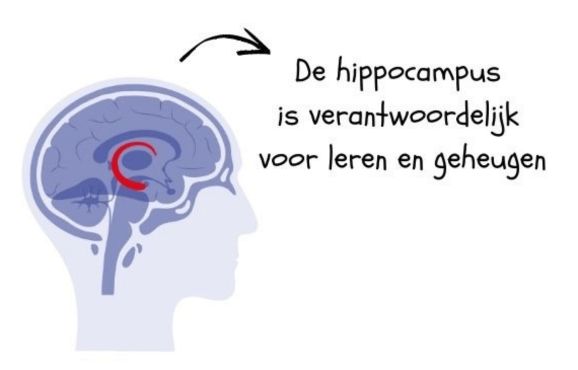 Hippcampus